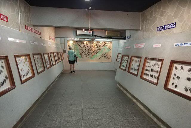 حديقة الفراشات في كوالالمبور من أهم المعالم السياحية