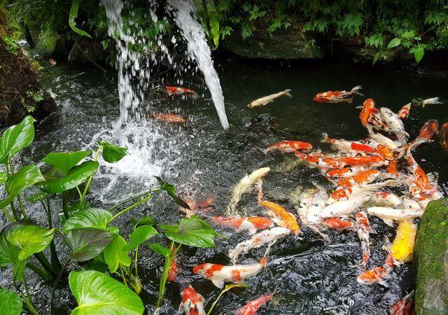 حديقة الفراشات في كوالالمبور من المزارات السياحية المشهورة