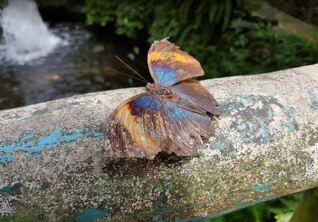حديقة الفراشات في كوالالمبور من أفضل المزارات بماليزيا