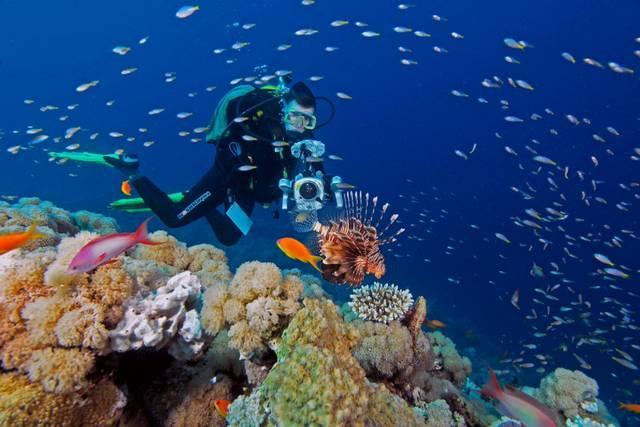 غواصين بحر الصحراء من منتجعات الغوص المشهورة