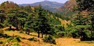 الحظيرة الوطنية من افضل الاماكن السياحية في تلمسان