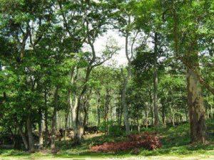 تعد حديقة بانيرغاتا في بنجلور من افضل اماكن السياحة في الهند