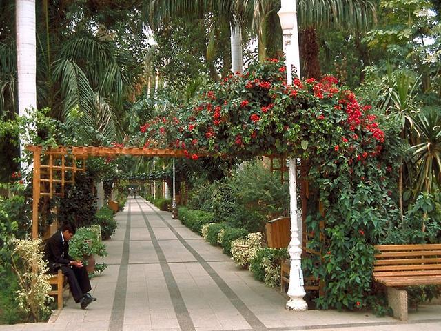 ممرات المشاة في جزيرة النباتات