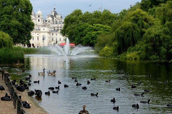 حديقة الغزلان في لندن