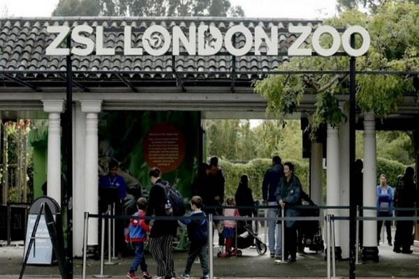 اماكن سياحية في لندن للاطفال