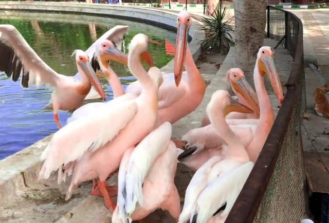 حديقة حيوانات الاسكندرية