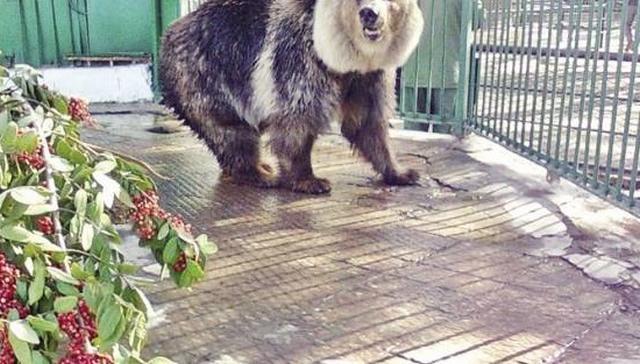 حديقة حيوان الإسكندرية