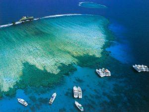 جزيرة تيران فى شرم الشيخ