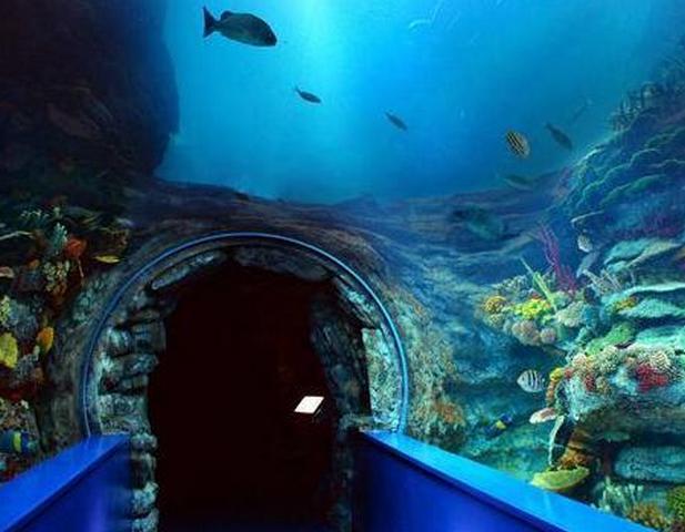متحف الأحياء المائية من متاحف الاسكندرية الرائعة