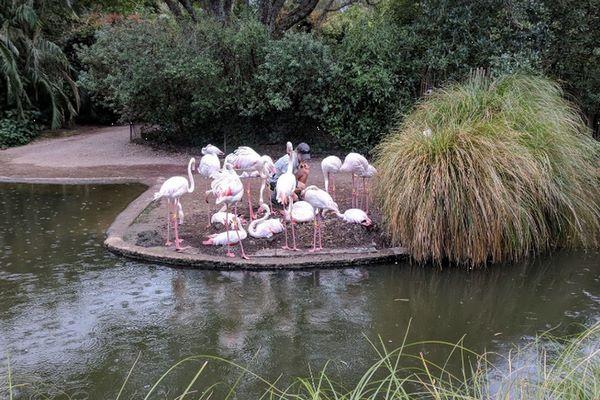 حديقة حيوانات في اوكلاند