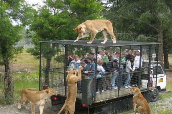 حديقة حيوانات اوكلاند