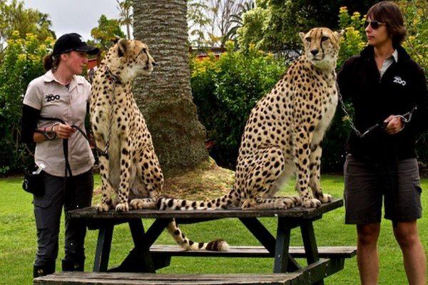حديقة حيوانات مدينة اوكلاند
