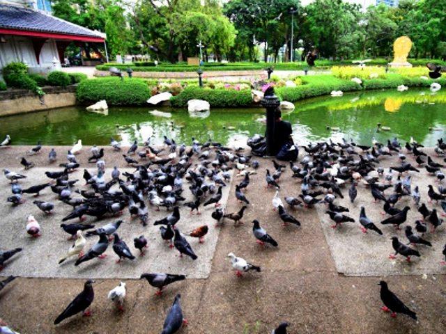 حدائق بانكوك تايلاند