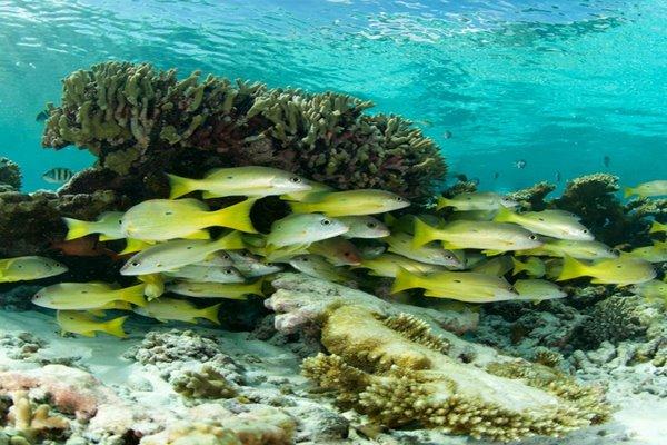 جزر في الامارات سياحية