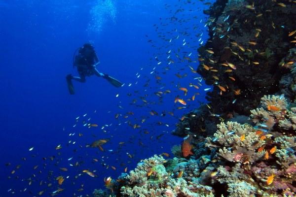 البحر الأحمر ووتر وورلد طابا من اهم الاماكن الترفيهية في طابا