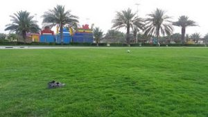 حديقة الجرف عجمان