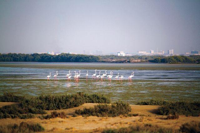 جزيرة السينية في ام القيوين