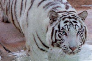 حديقة الحيوانات راس الخيمة افضل حدائق راس الخيمة