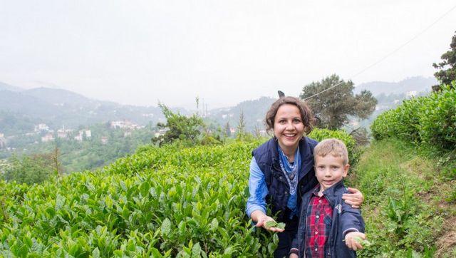 مزارع الشاي تركيا