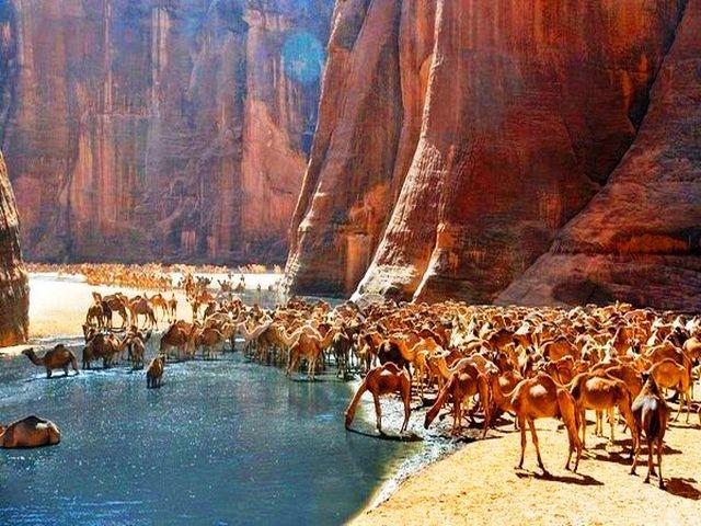محمية وادي الجمال في مرسى علم