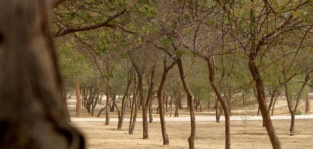 منتزه الاحساء الوطني السعودية