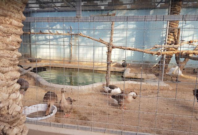 موقع حديقة الطرف النموذجية في الاحساء