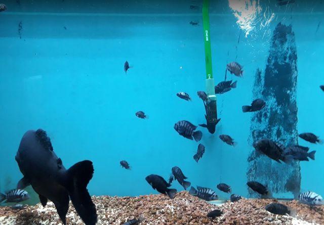 حديقة حيوانات انقرة تركيا