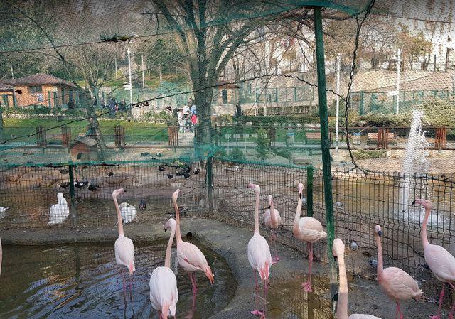 حديقة حيوانات انقرة بتركيا