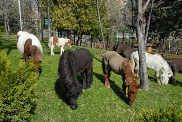 حديقة حيوانات انقرة في تركيا
