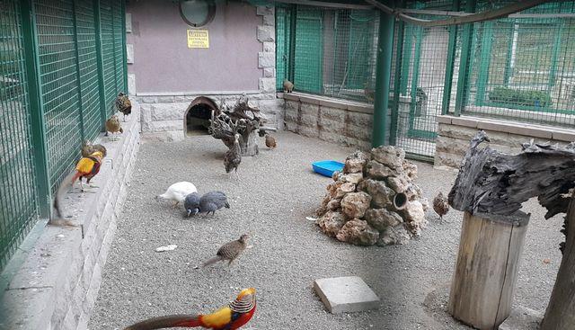 حديقة الحيوانات في انقرة بتركيا