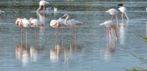 حديقة الطيور في سبانجا