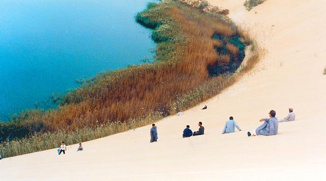 بحيرة الاصفر في الاحساء