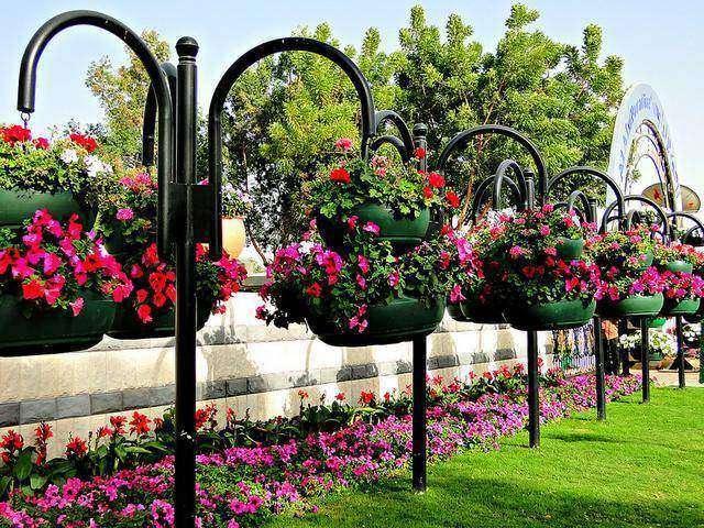 حديقة الزهور في العين
