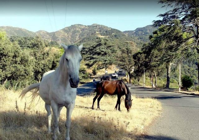 جبال البليدة الجزائرية