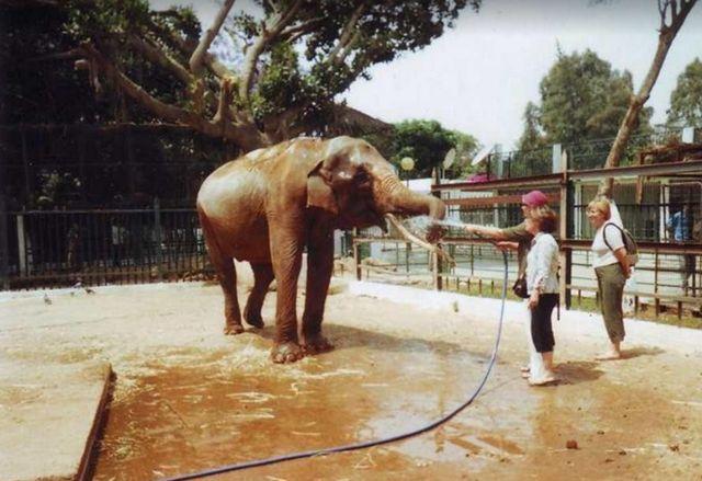 حديقة الحيوانات في وهران