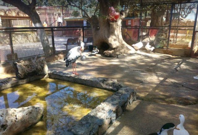 ساعات عمل حديقة الحيوانات بوهران