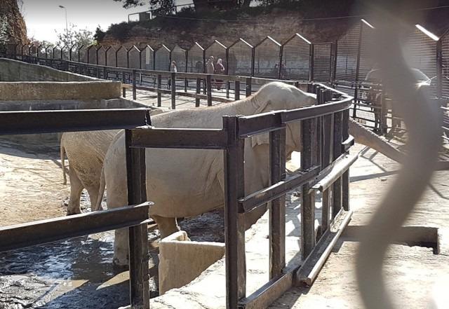 حديقة الحيوانات في الجزائر العاصمة