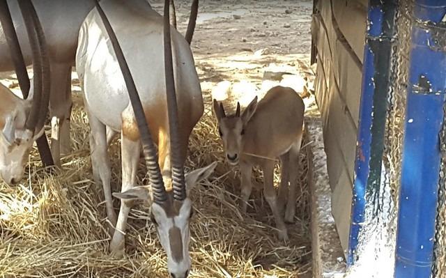 حديقة حيوانات الجزائر العاصمة