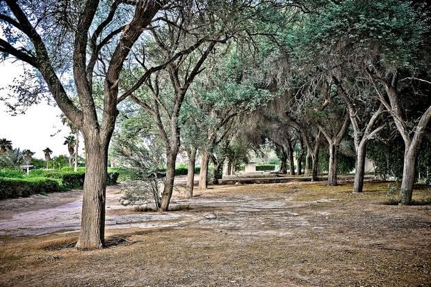 حديقة الخور قطر نباتات