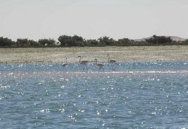 السياحة بالعاصمة نواكشوط