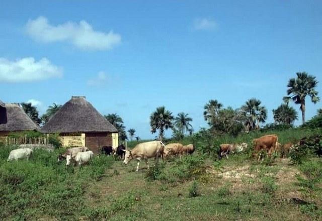 ما هي عاصمة السنغال