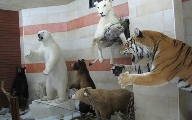 حديقة الحيوانات في جيجل