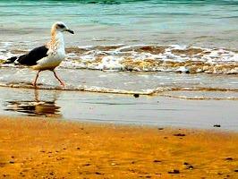 شواطئ مسقط من افضل اماكن مسقط السياحية
