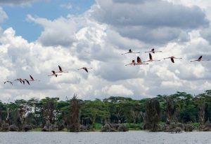 السياحة في نيروبي
