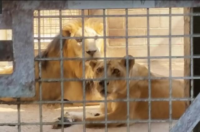 حديقة حيوان قطر
