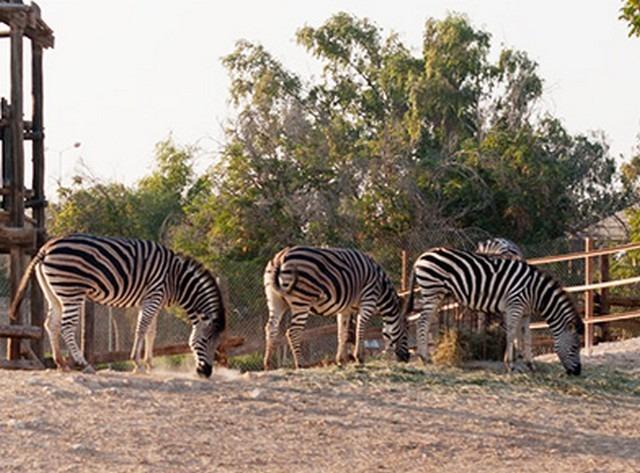 حديقة الحيوان قطر الدوحة