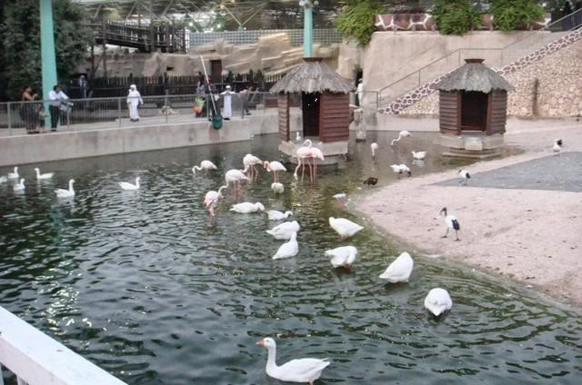 حديقة الحيوان بقطر