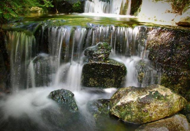 حدائق بينانج النباتية
