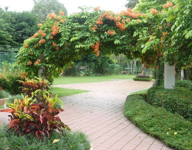 حديقة بينانج