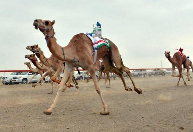 السياحة في ولاية صحار